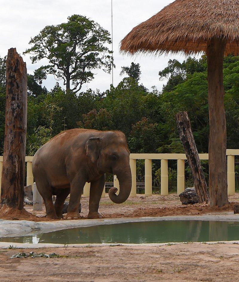 Cambodia elephant lonliest