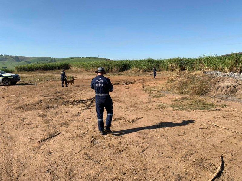 Riet valley sugarcane field
