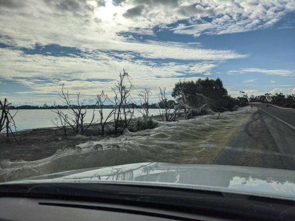 Spiderwebs cover town in eastern Victoria Australia