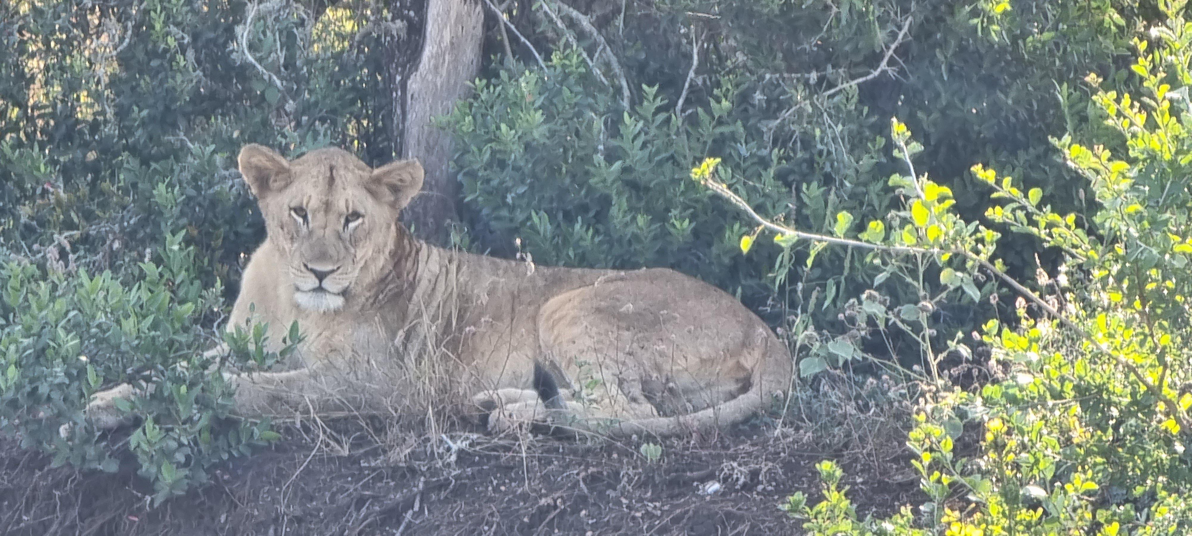 Keri Lion