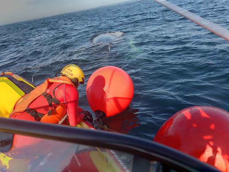 Humpback whale entangled in fishing ropes set free near Yzerfontein