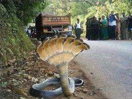 snake myths