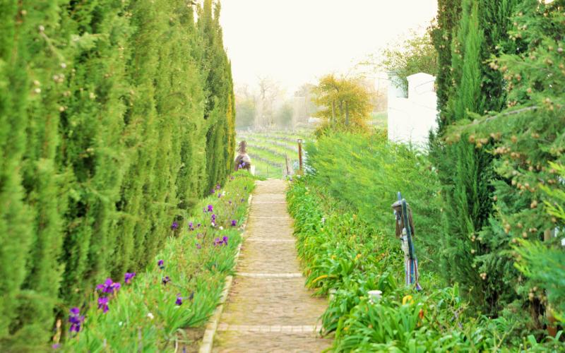Val du Charron vineyard path