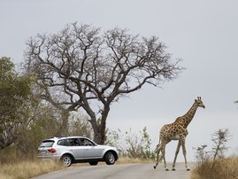 Kruger National Park_gallo