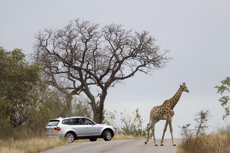 Kruger National Park_gallo
