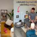 WATCH: When your dogs need their own space to chill and you make them a mini living room...
