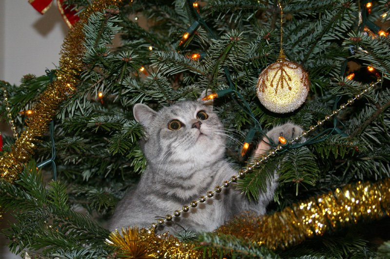 Cats Vs Christmas Trees.Videos Cats Vs Christmas Trees
