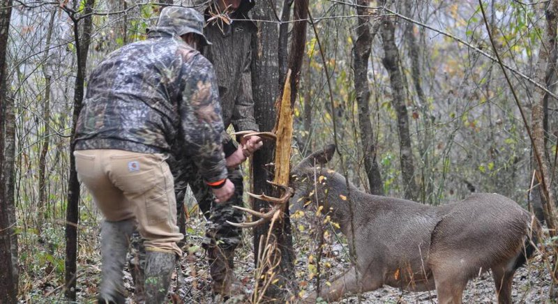 Ironic Moment Hunters Rescue Deer Trapped Between Tree