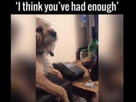 Dog Drink Thumb