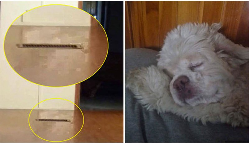 A dog that was put down comes back as ghost
