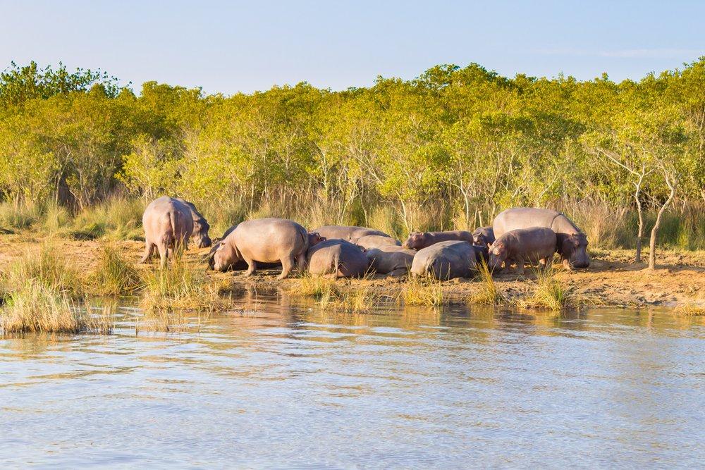 heritage site hippo