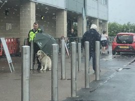 Dog in Scotland