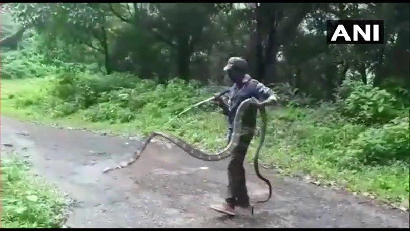 15-feet-long snake
