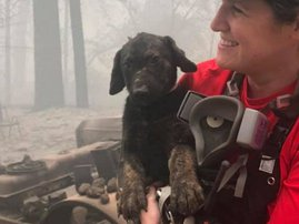 Puppy rescued from rubble in wildfire