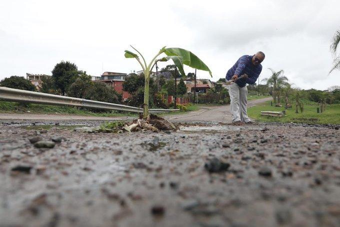 Kwadukuza man plants trees in potholes
