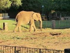 Elephant Thandora.jpg