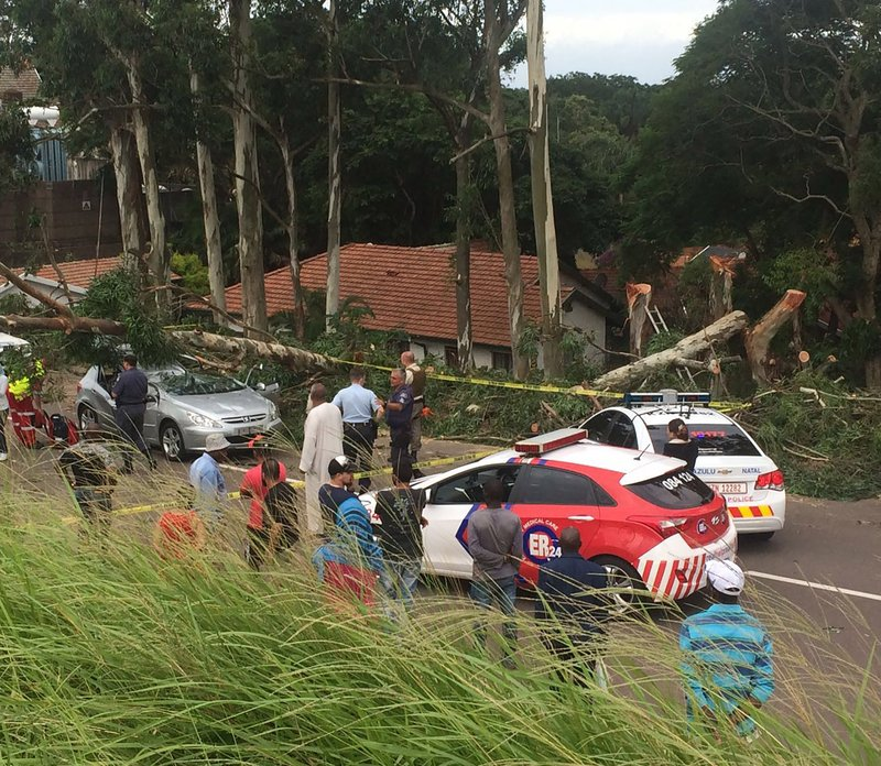 Man crushed to death by tree in Westville