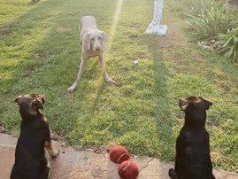 Martin Bester's puppies