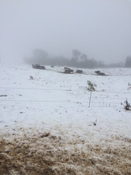 Snow chasers cost KZN farmers thousands in damages