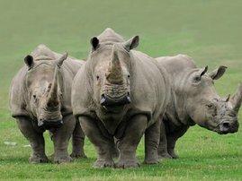 First-rhino-death-of-20141_2.jpg