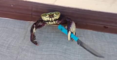 gangster crab