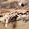 A 200 000 year old bed found in KZN