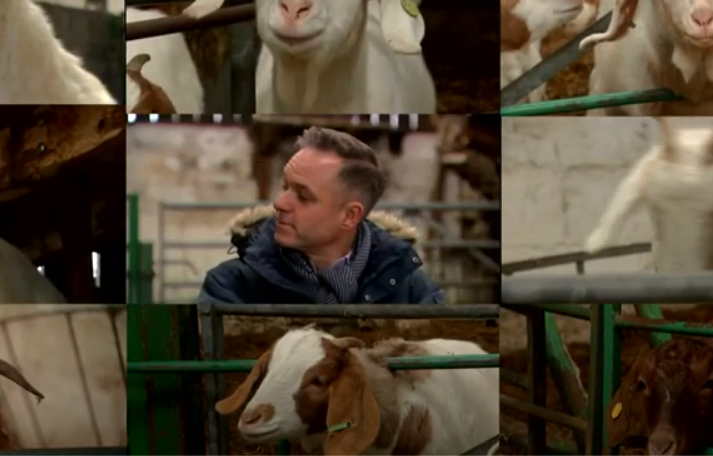 Goats on Zoom