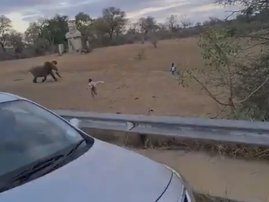 Elephants chasing