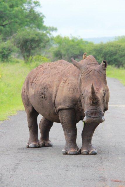 how to change camera width rhino
