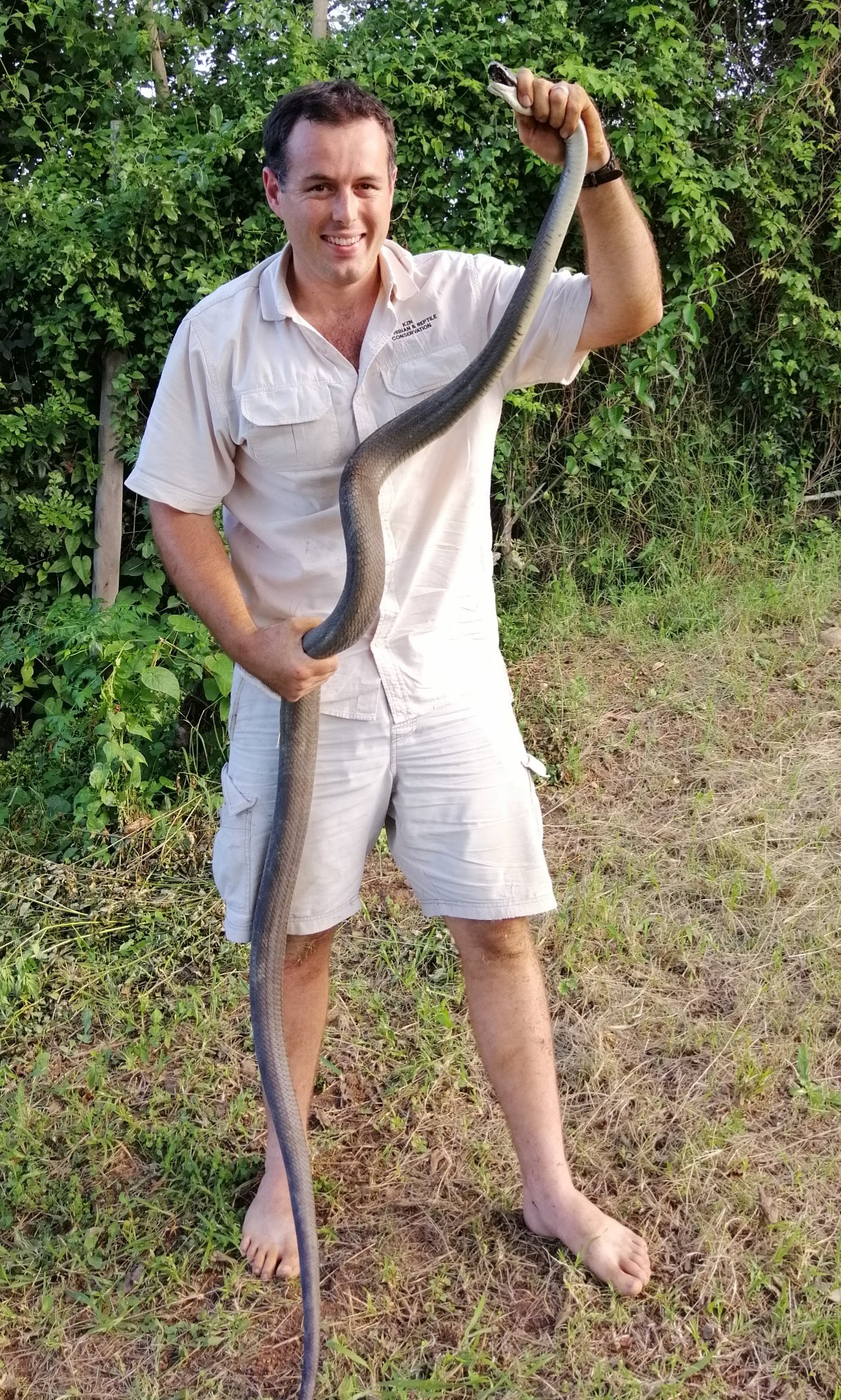 Massive black mamba in Durban gives Nick a run for his money