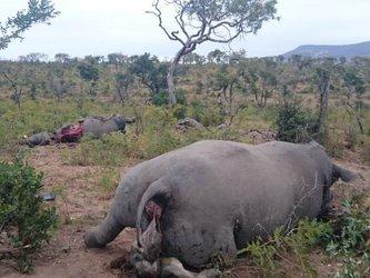image rhino