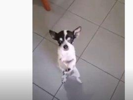 Dog takes on the Master KG's 'Jerusalema' dance challenge