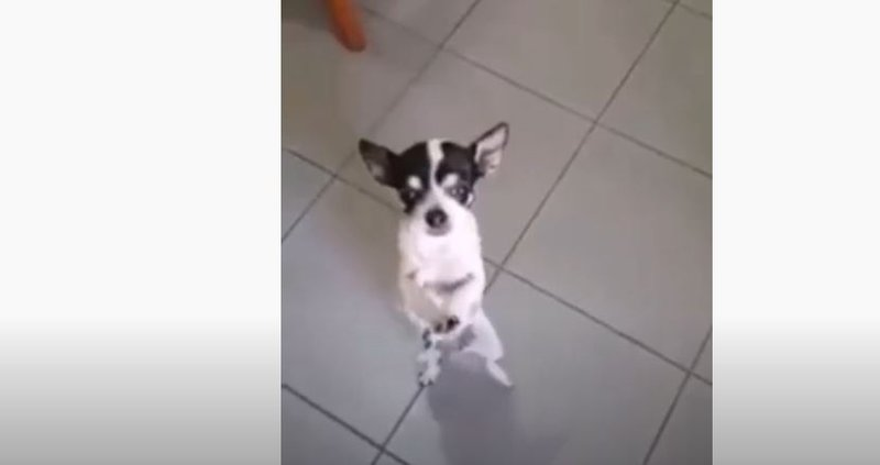 Dog takes on the Master KG's 'Jerusalema' dance challenge
