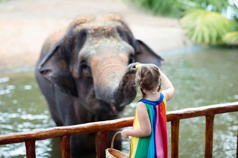 Kids feed elephant in zoo