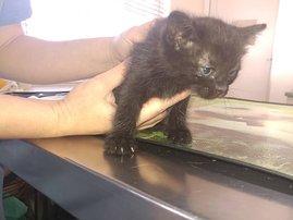 image kitten dumped on highway