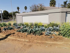 Vegetable garden on pavement