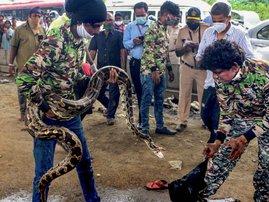 Python rescued in Mumbai