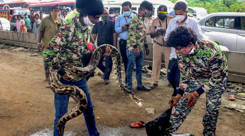 Python rescued in Mumbai