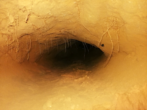 Python Nest