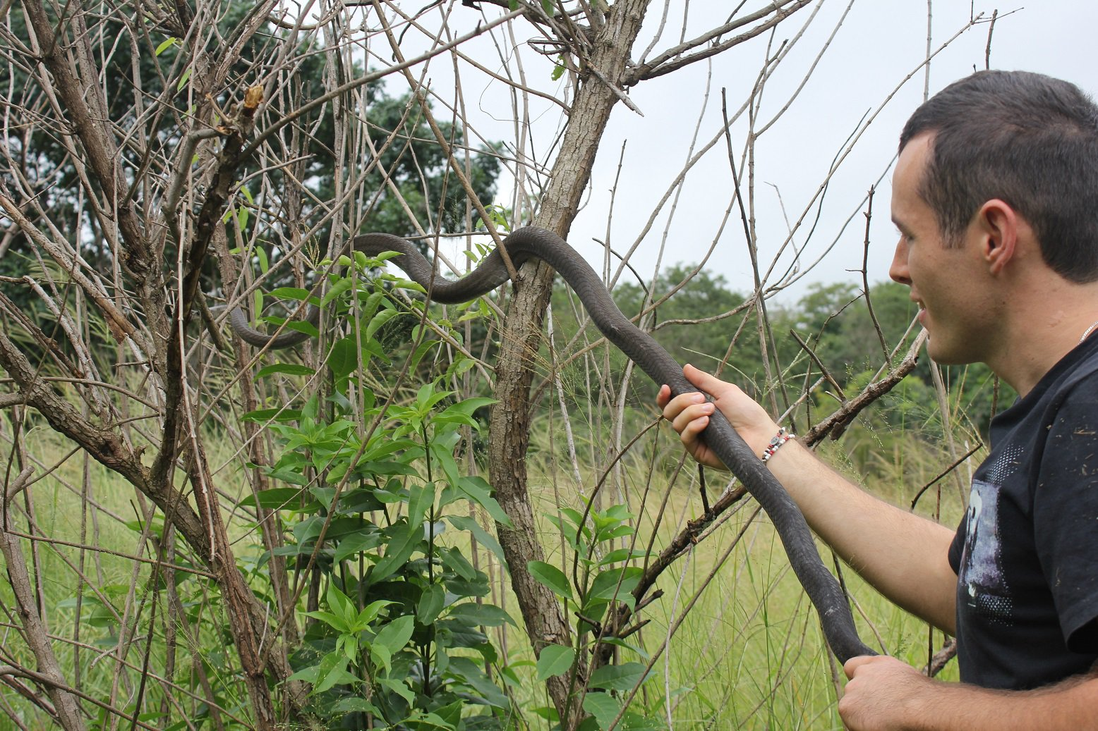 Nick Evans releases a Black Mamba