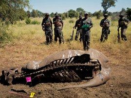 Rhino poachers.jpeg