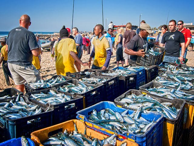 Still some hope for 2016 sardine run