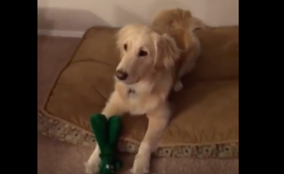 Owner Dresses Up As Dog S Toy