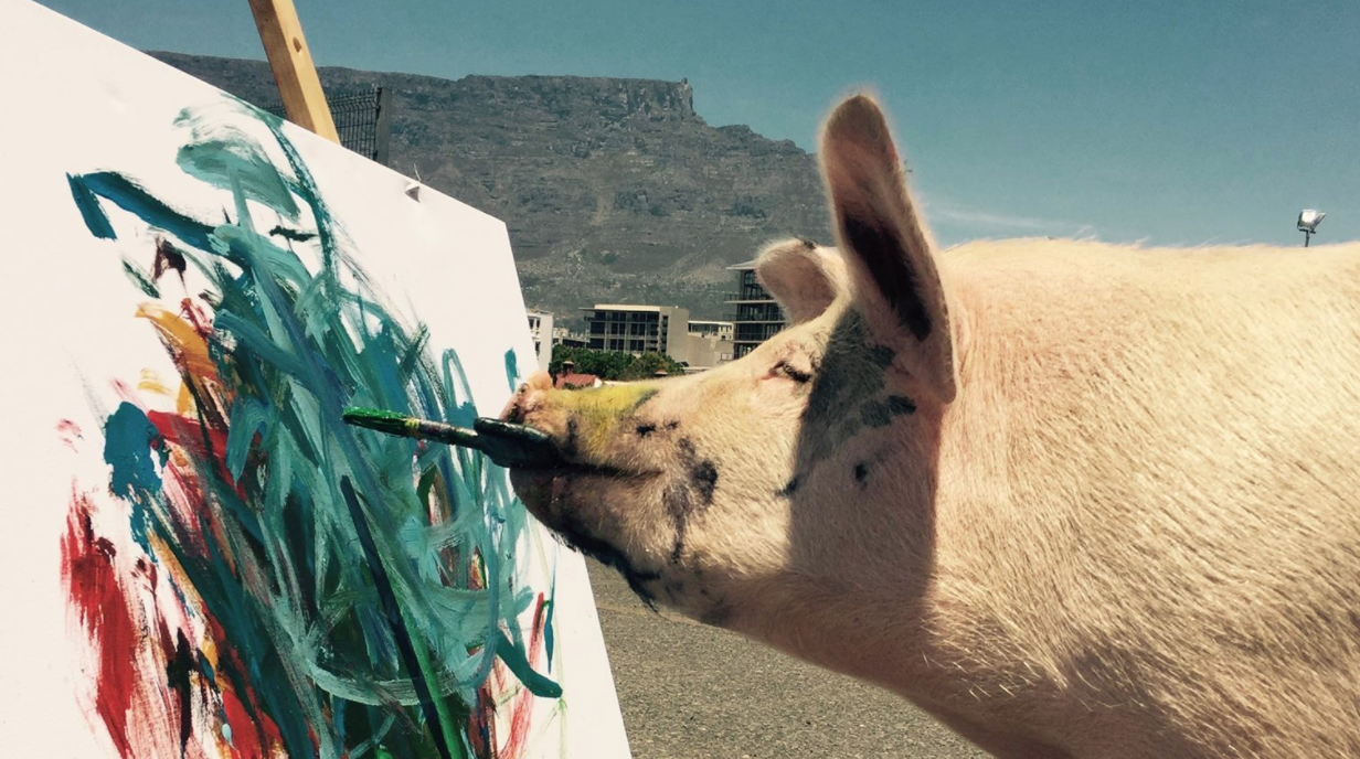 meet pigcasso south africas famous painting pig