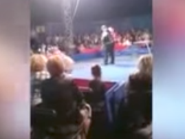 bear jumps into audience