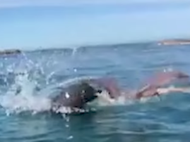seal lunch