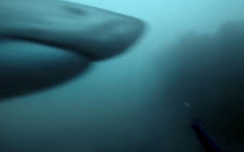 shark attack youtube