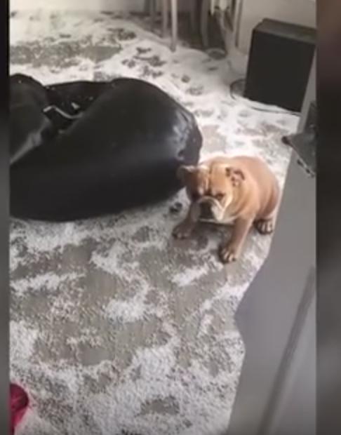 Dog turns living room into winter wonderland