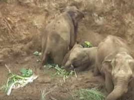 Baby elephants rescued from Well in Sri Lanka