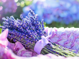 lavender pexels